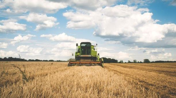 A combine harvester trawling through a field of wheat
